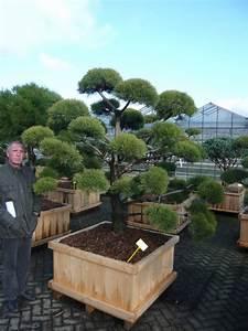 pflanzenspecial gartenbonsai kostbarkeiten japans With whirlpool garten mit baum bonsai