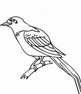 Crow Coloring sketch template