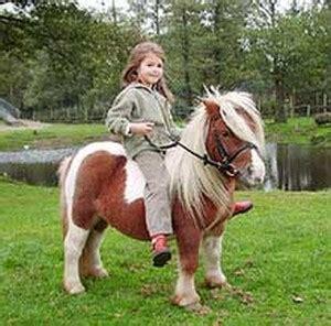 bilder ponyhof woltermann reiterferien  niedersachsen