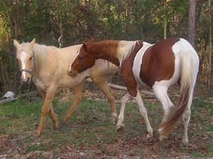 Paint Horse and Palomino by nina-c on DeviantArt