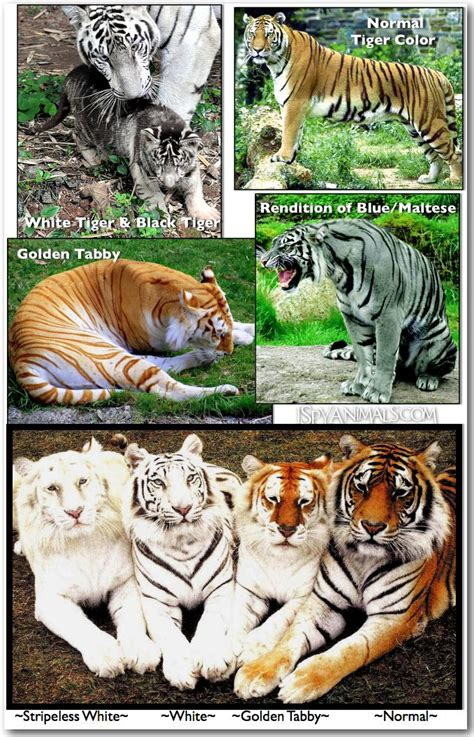 Best Images About Animal Mutations Rare Colors Looks