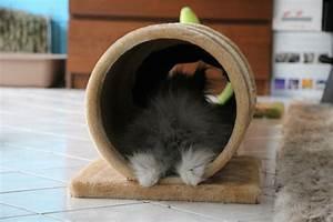 Maison Pour Lapin : jeux pour lapins ~ Premium-room.com Idées de Décoration