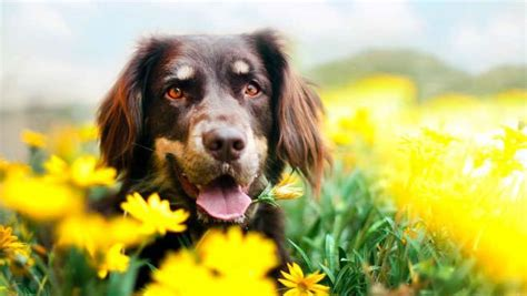 fiori di bach per i cani fiori di bach per cani agitati aggressivi o paurosi