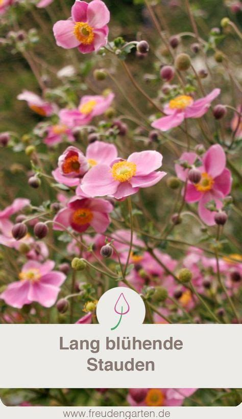 Stauden Die Lange Blühen by Blumen Die Lange Bl 252 Hen Garten Garten