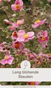Lang Blühende Pflanzen : blumen die lange bl hen garten pinterest garten garten ideen und garten pflanzen ~ Eleganceandgraceweddings.com Haus und Dekorationen