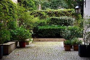 citronniers voile tout With amenagement petit jardin zen 3 jardin de ville conseils de creation dentretien choix