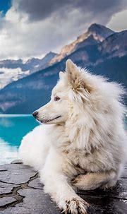 Alaskan Malamute Dog Phone Wallpaper Lockscreen HD 4K ...