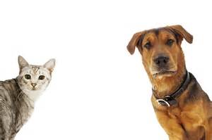dogs that are with cats 8 best products for dogs and cats tipsaholic