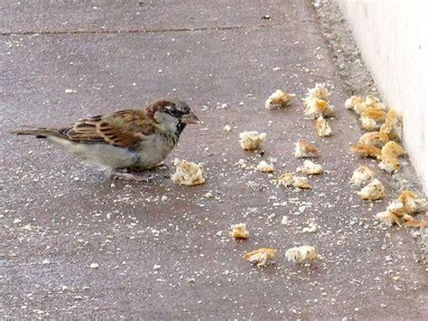 all kinds of bird crumbs cogdogblog