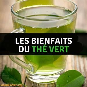 Bienfaits Du Thé Vert : th br le graisse comment le th vert peut vous aider ~ Melissatoandfro.com Idées de Décoration