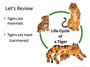 Teacher Guide Animal Adaptations  Rousseau  And Chimera
