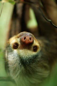bugs  sloths eat animals momme