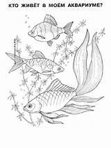 Fish Coloring Aquarium Pages Mycoloring Printable sketch template