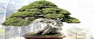 Bäume Beschneiden Jahreszeit : bonsai pflege standort gie en gestaltungstipps ~ Yasmunasinghe.com Haus und Dekorationen