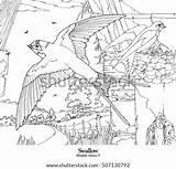 Line Swallow Rustica Hirundo Drawings Series Shutterstock Coloring Vector Goat Draw Similar Garden sketch template