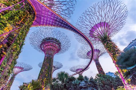 singapore supertrees  skywalk  gardens   bay