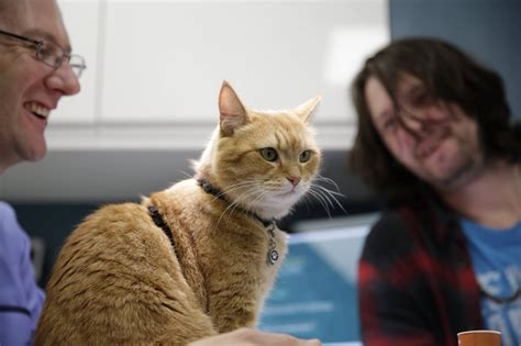 Bob The Street Cat Opens The London Cat Clinic