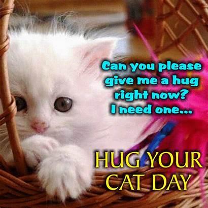 Hug Cat Give Please Card