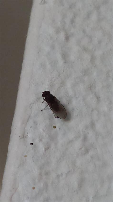 insecte de cuisine insecte cuisine marron cuisine nous a fait à l