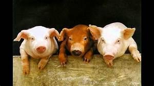 Youtube Trois Petit Cochon : les 3 petits cochons by jaguarou remix youtube ~ Zukunftsfamilie.com Idées de Décoration