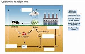 Solved  Correctly Label The Nitrogen Cycle  Nitrogen In At