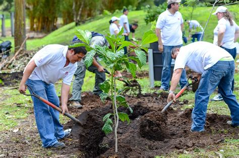 'environmental Hero' Reforestation Campaign Aims To