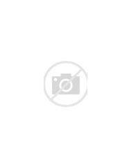 Anemone Garden Flowers