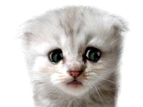kucing comel nyanyi lagu hazama youtube