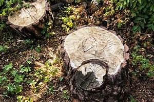 Baumstumpf Verrotten Beschleunigen : baumstumpf durch verrottung entfernen ~ Watch28wear.com Haus und Dekorationen