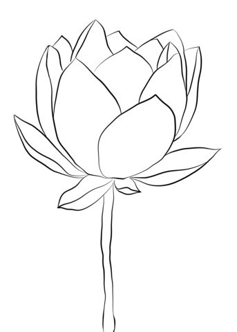 Lotus Flower coloring page | Free Printable Coloring Pages