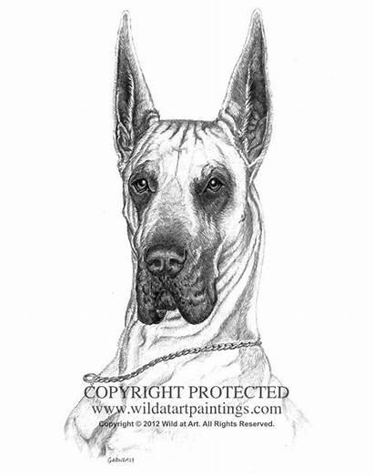 Drawings Dane Drawing Graphite Draw Dog Portrait