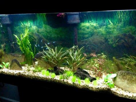 diagnosing problems  aquarium plants ratemyfishtankcom