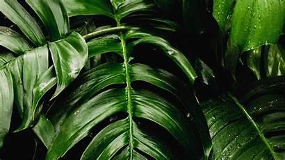 Fresh Plants Leaf Background Desktop Wallpapersmug 1080p
