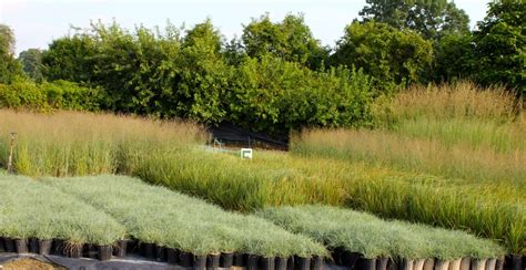 Fall Is For Planting…ornamental Grasses! But So Is Spring