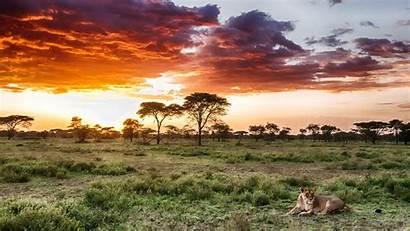 Serengeti National Park Tanzania Africa Safari Lion