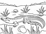 Coloring Pages Alligator Baby Crocodile Colouring Printable Picnic Print Cool2bkids Printables Table Template Reptiles Animal Getcolorings sketch template