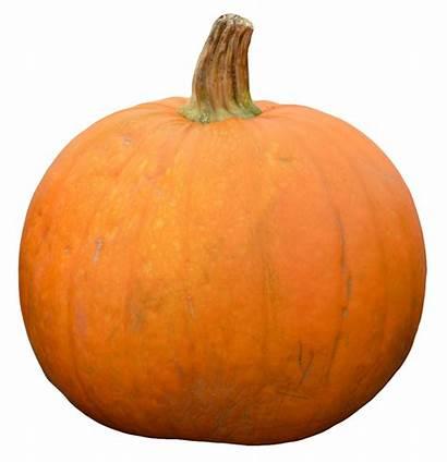 Pumpkin Transparent Purepng Halloween