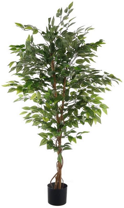 home affaire kunstpflanze 187 ficus benjamini 171 in 2 gr 246 223 en
