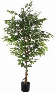 Ficus Benjamini Gelbe Blätter : home affaire kunstpflanze ficus benjamini in 2 gr en online kaufen otto ~ Watch28wear.com Haus und Dekorationen