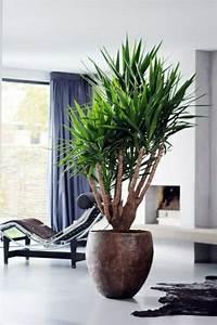 Dekorative Pflanzen Fürs Wohnzimmer : palmlilie yucca wohnzimmer liege pelzteppich pflanzen und blumen pinterest html ~ Eleganceandgraceweddings.com Haus und Dekorationen