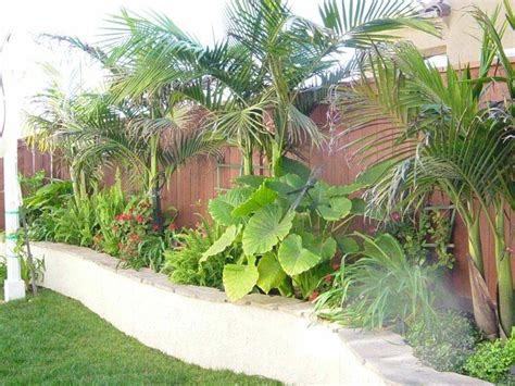 tropical front garden ideas exterior front yard landscape design home ideas collection distinctive tropical front yard
