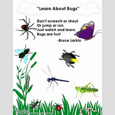 Bruce Larkinlearn About Bugs
