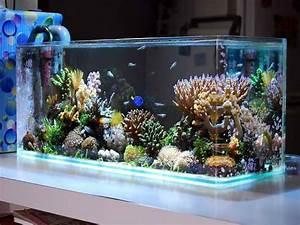 Indoor  Cool Saltwater Aquarium Design Ideas Picture