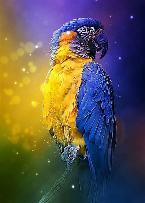 Art Parrot Image Pictures, Photos, and Images for Facebook ...