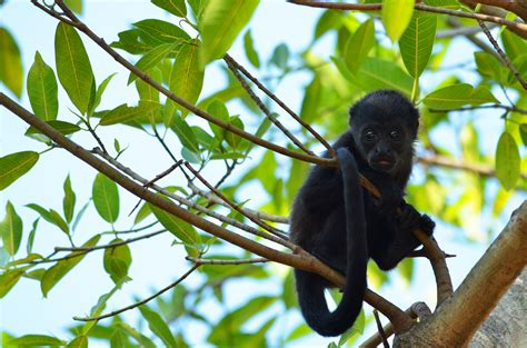 Essential Costa Rica Tour by Costa Rica Monkey Tours with ...