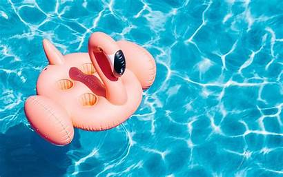 Pool Water Flamingo Summer Laptop Background Pc