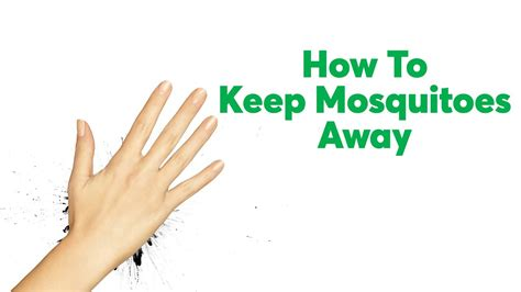 how to keep mosquitoes away consumer reports youtube