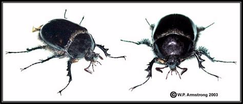 Types Of Beetles And Names