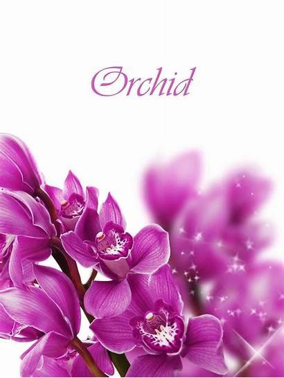 Purple Orchid Flowers Fanpop Wallpapersafari 1920
