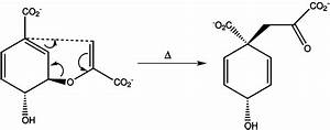 Give An Example Of Reaction Catalysed By An Enzyme